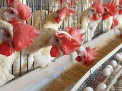 profitable-livestock-farming-business-ideas-in-ghana